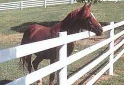 Clôture cheval