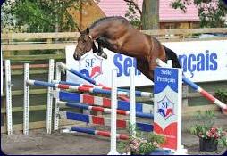 Marcheur chevaux bon pour physique